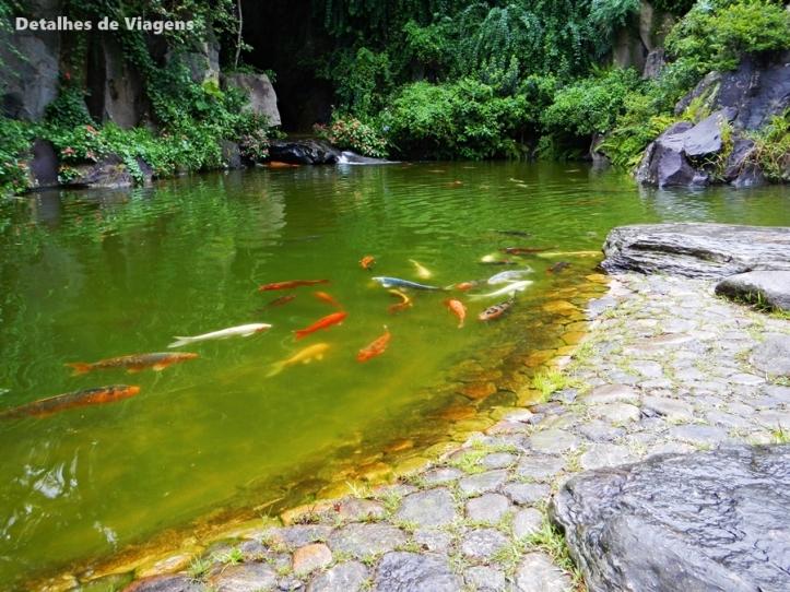 carpas lago solo sagrado guarapiranga
