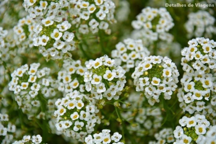 flor alisson