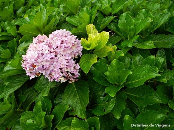 hortensia solo sagrado guarapiranga parelheiros