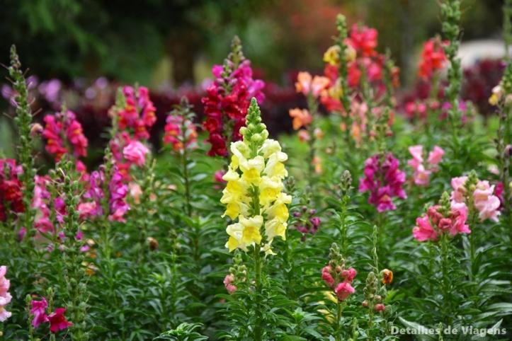 jardim dos pinhais ecco parque santo antonio do pinhal