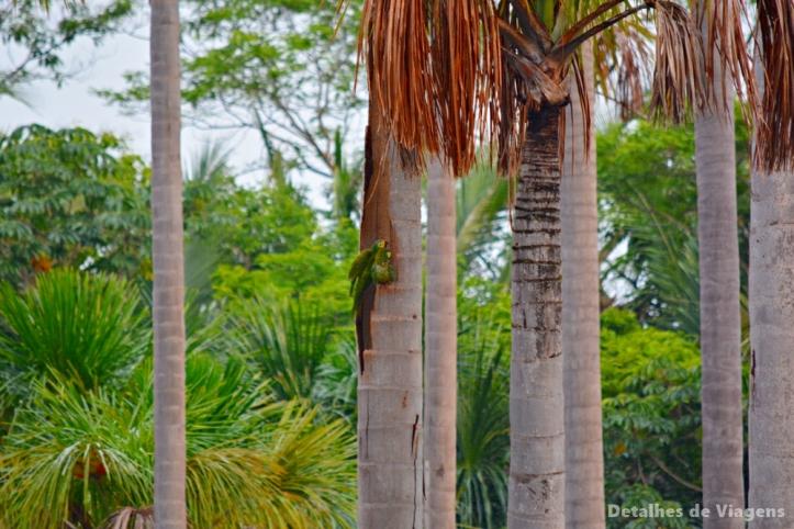lagoa das araras bom jardim nobres aves