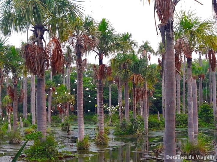 lagoa das araras nobres bom jardim viagem