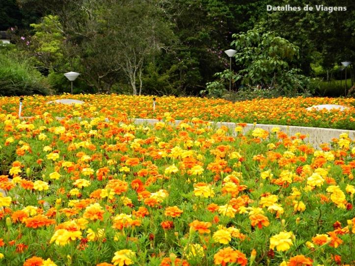 solo sagrado de guarapiranga flores passeio relato