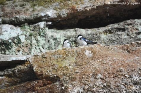 andorinhas caverna