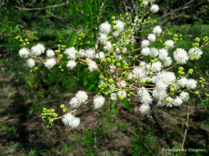 camping itirapina mirante das aguas saltao natureza flores