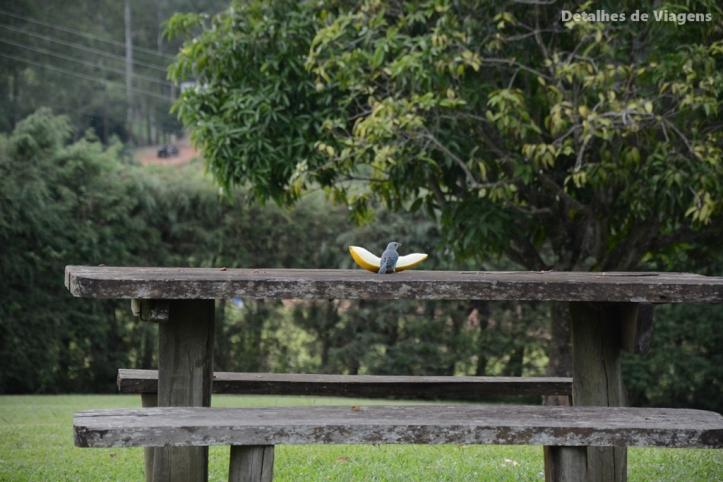 passarinho comendo melao
