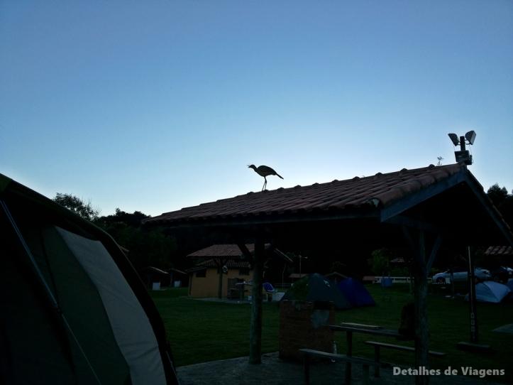 siriema camping