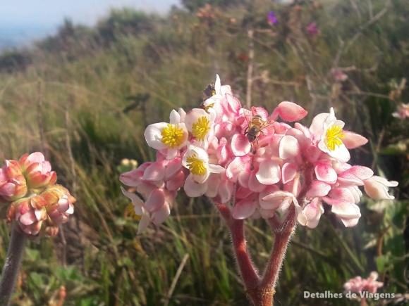 flores trilha ibitipoca (2)