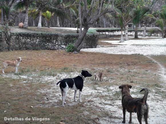 gente de mar resort cartagena (2)
