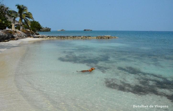 ilha cartagena isla grande praia caribe colombiano