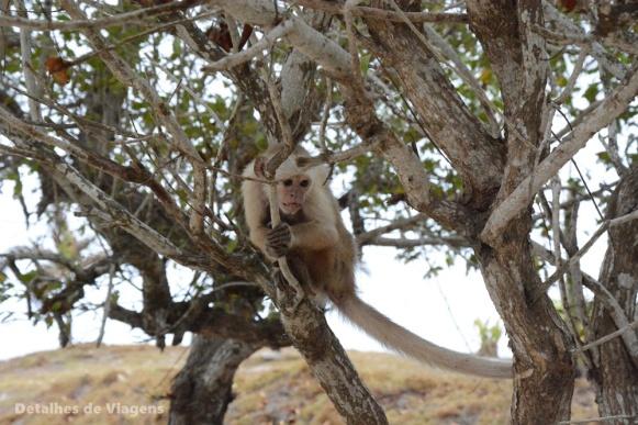 macaco prego isla grande cartagena