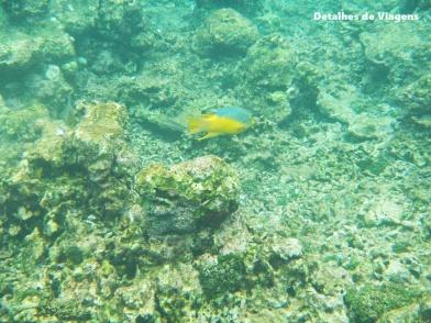 mergulho snorkel cartagena dicas roteiro