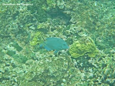 mergulho snorkel ilhas cartagena isla grande