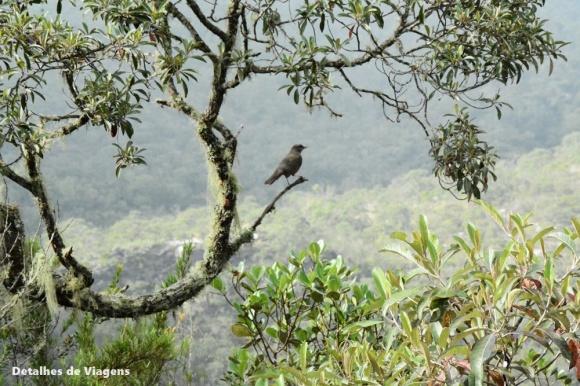 natureza ibitipoca