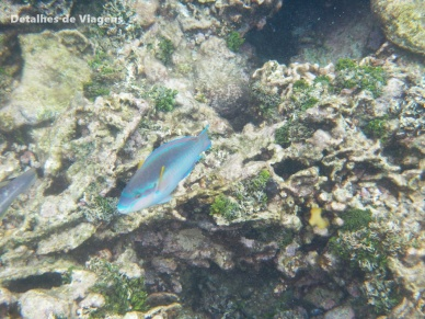 peixes snorkel cartagena ilha