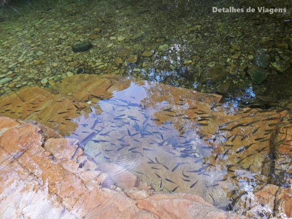 peixinhos trilha do sol capitolio