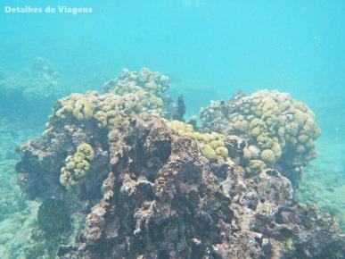 snorkeling isla grande cartagena