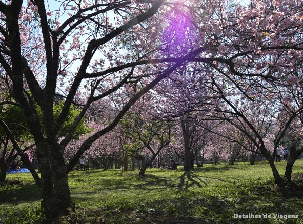 bosque das cerejeiras parque do carmo sao paulo
