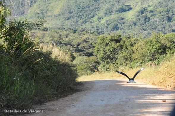 estrada parque nacional serra da canastra minas gerais 2
