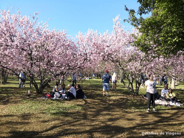 festa das cerejeiras parque do carmo sao paulo fotos