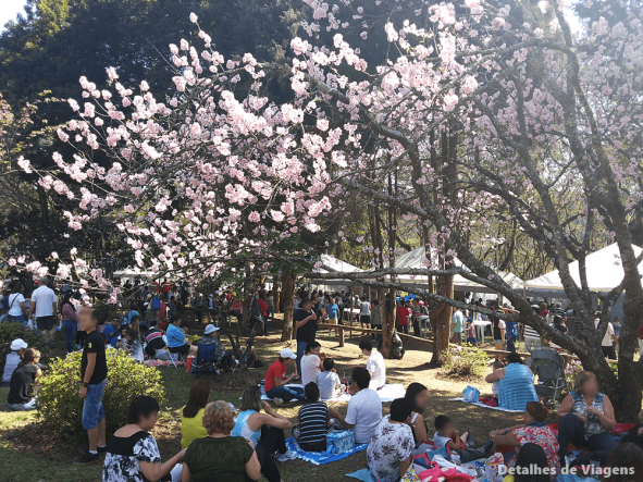festa das cerejeiras parque do carmo sao paulo hanami