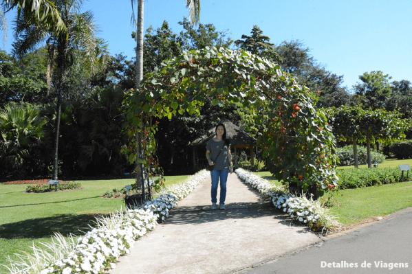 jardim botanico sao paulo plantarum 3