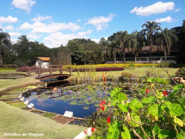 lago ninfeias jardim botanico plantarum sao paulo 2