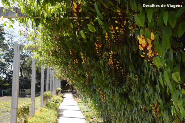 trepadeiras sapatinho de judia jardim tunel