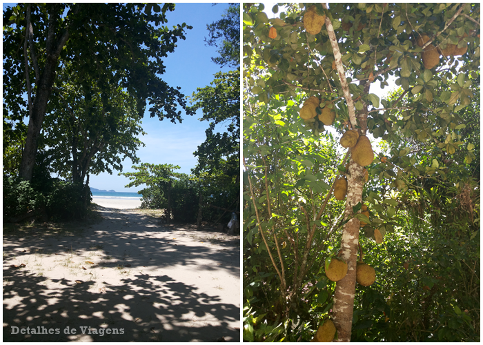 camping-caracol-ubatuba-praia-da-fazenda-relato-viagem