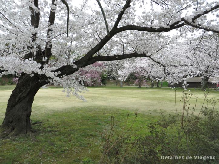 castelo-nijo-cerejeiras-nijojo-castle-kyoto-quioto-japao-relatos-viagem-roteiro