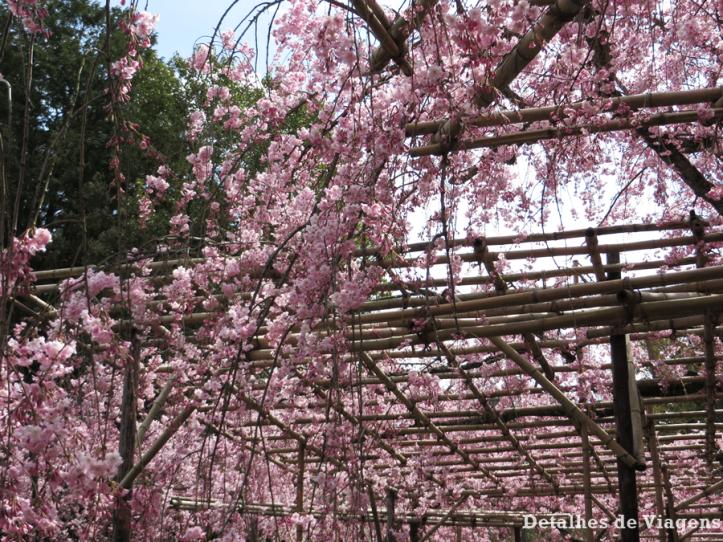 heian-shrine-jardim-sakura-cerejeiras-kyoto-quioto-relatos-viagem-roteiro-2