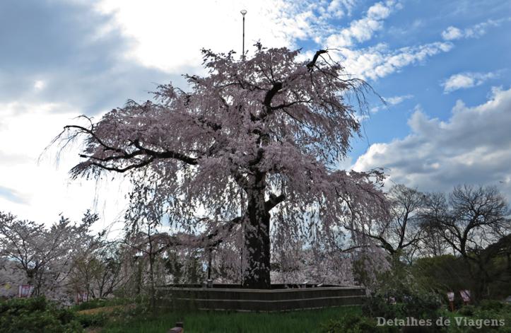 maruyama-park-cerejeira-chorona-kyoto-quioto-roteiro-dicas-viagem