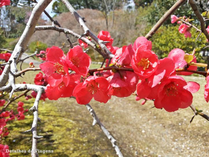 nara-isuien-garden-jardim-relatos-de-viagem-roteiro-japao-dicas-o-que-fazer-8