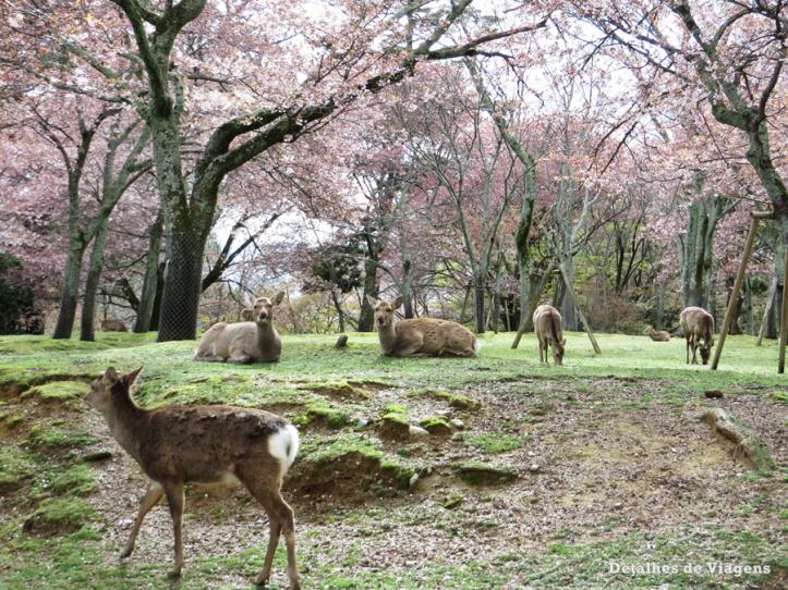 nara park relatos viagem roteiro japao dicas o que fazer visitar atracoes 7.png