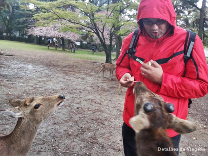 nara-park-veados-roteiro-viagem-japao-relatos-dicas