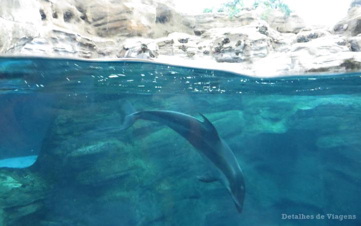 osaka-aquario-kaiyukan-relatos-viagem-roteiro-japao-dicas-12