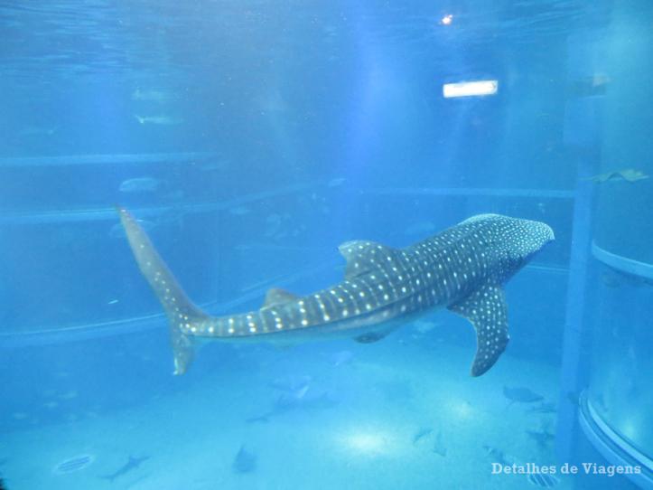 osaka-aquario-kaiyukan-relatos-viagem-roteiro-japao-dicas-3