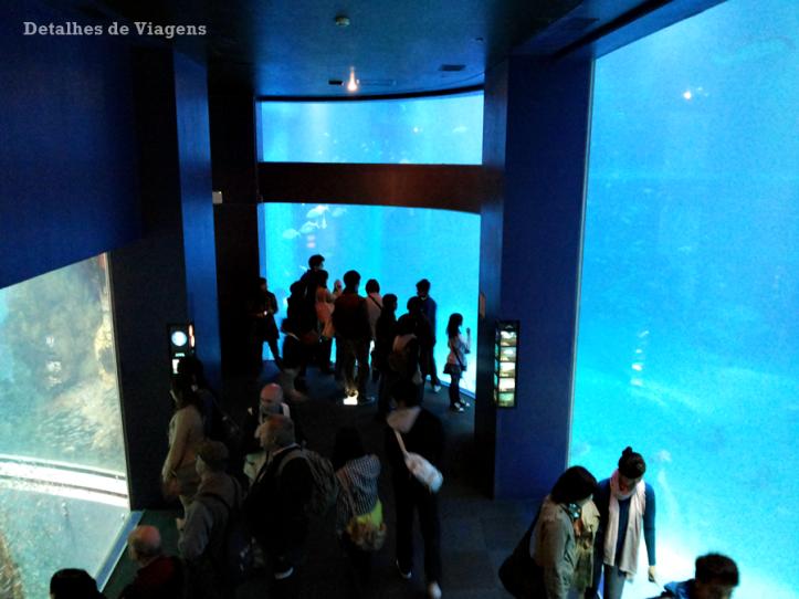 osaka-aquario-kaiyukan-relatos-viagem-roteiro-japao-dicas-4