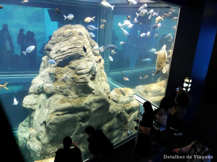 osaka-aquario-kaiyukan-relatos-viagem-roteiro-japao-dicas-5
