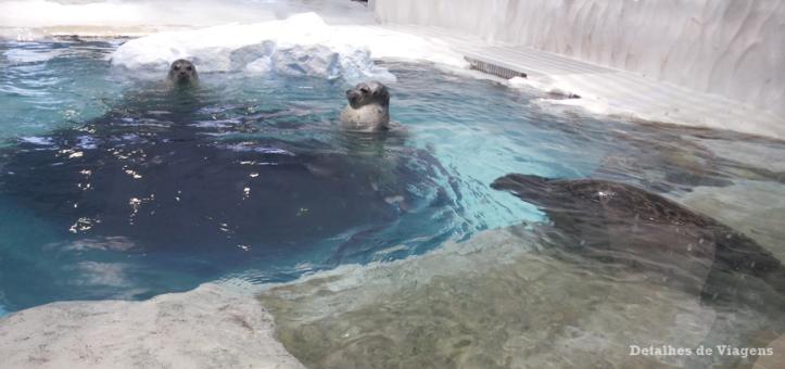 osaka-aquario-kaiyukan-relatos-viagem-roteiro-japao-dicas-6