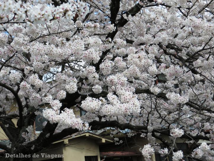philosophers-path-caminho-do-filosofo-kyoto-quioto-cerejeiras-sakura-japao-roteiro-relatos-viagem