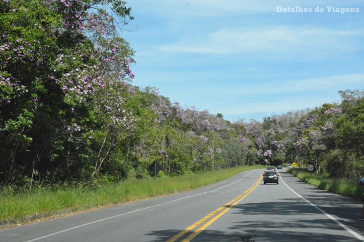 rodovia-oswaldo-cruz-arvores-manacas-floridos-ubatuba-dicas-relatos-viagem-2