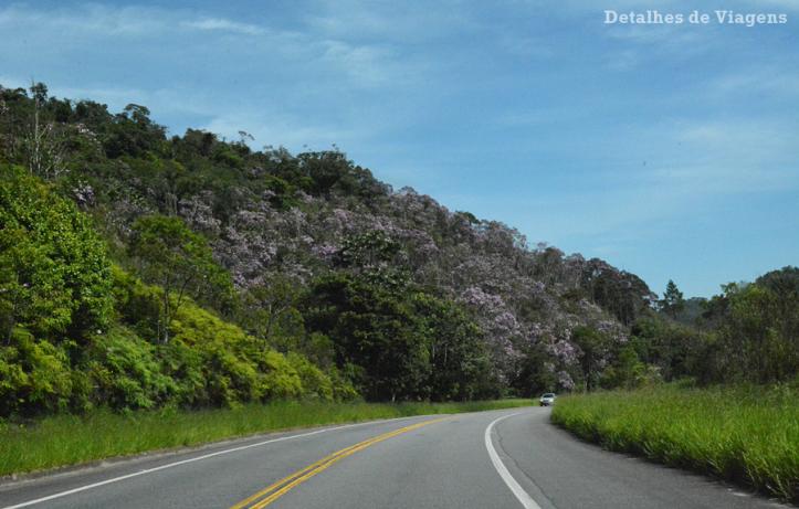 rodovia-oswaldo-cruz-arvores-manacas-floridos-ubatuba-dicas-relatos-viagem