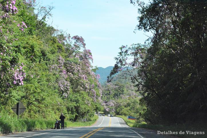 rodovia-oswaldo-cruz-flores-arvores-manaca-ubatuba-dicas-relatos-viagem