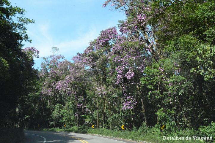 rodovia-oswaldo-cruz-manacas-ubatuba-dicas-relatos-viagem