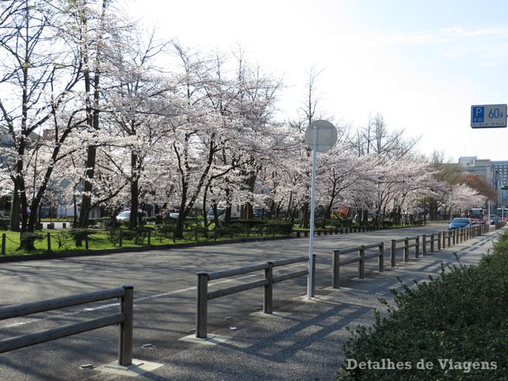 ruas-kyoto-quioto-cerejeiras-floridas-sakura-relatos-de-viagem-roteiro