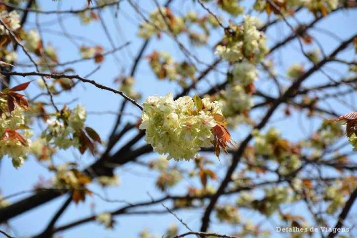 Tokyo sakura east gardens Imperial Palace palacio imperial relatos roteiro viagem japao dicas.png