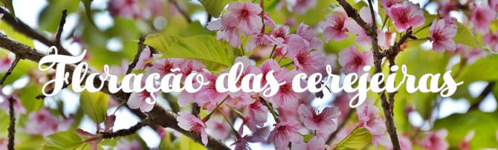 Floraçao cerejeiras sakuras japao hanami roteiro viagem relatos dicas.png