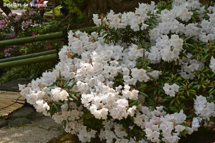 kamakura hasedera Temple hase temple jardim roteiro japao relatos viagem dicas 3.png