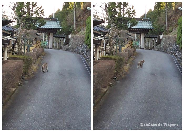 macaco nikko relatos viagem japao roteiro dicas 2.png